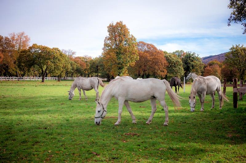 Lipica, la culla dei cavalli bianchi e la degustazione nella cantina